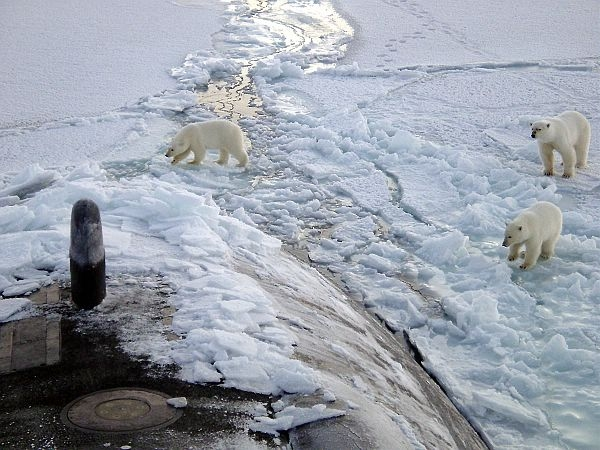 Three polar bears on ice by the front of a submarine broken throughout the ice