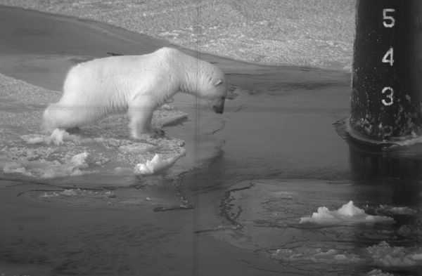 Polar bear looking down through water and ice at the front of a submarine